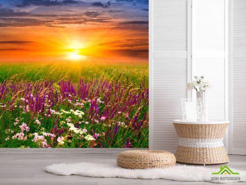 обои Природа Фотообои Полевые цветы, закат