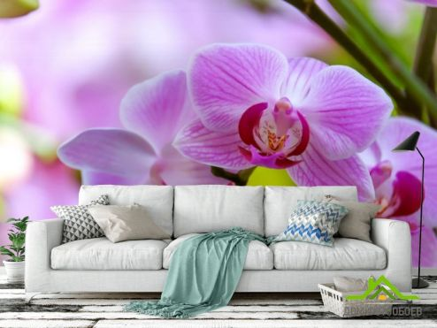 Орхидеи Фотообои орхидеи с листиком
