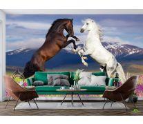 Фотообои белая и черная лошадь