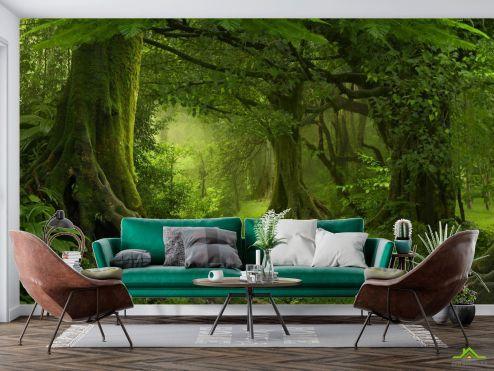 Природа Фотообои зеленый лес