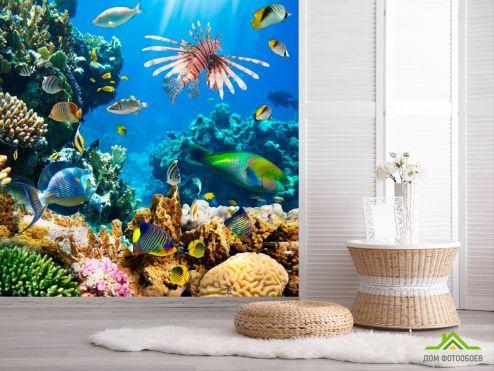 обои Рыбы и море Фотообои Подводные кораллы