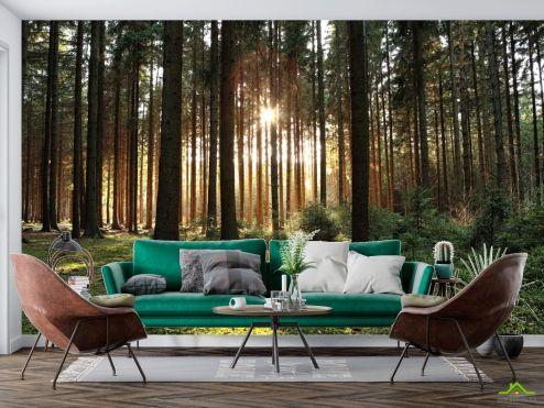 Фотообои Природа по выгодной цене Фотообои солнце пробивается в лесу