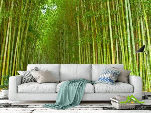 лес Фотообои Много бамбука
