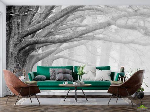 Черно-белые  Фотообои деревья