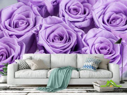 Фотообои разные по выгодной цене Фотообои фиолетовые розы