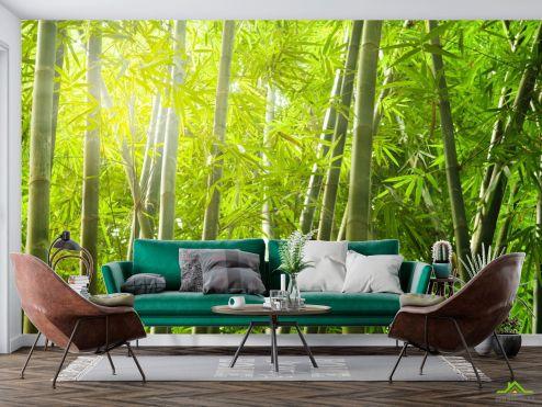 Природа Фотообои бамбуковый лес