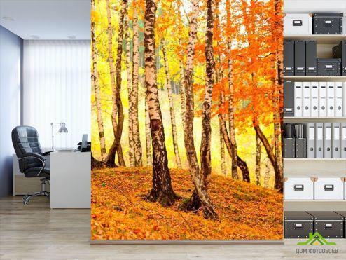 Оранжевые  Фотообои Березовыйшёпот