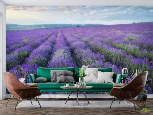 Природа Фотообои лавандавое поле