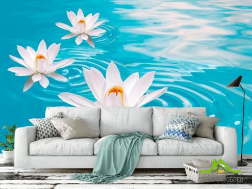 обои Цветы Фотообои Кувшинки белые