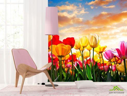 обои Цветы Фотообои Тюльпаны в закате