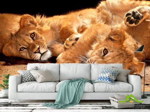 Львы Фотообои Львята