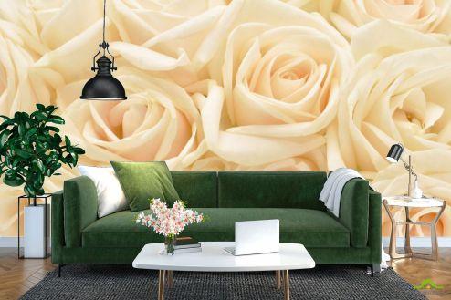 Розы Фотообои кремовые розы