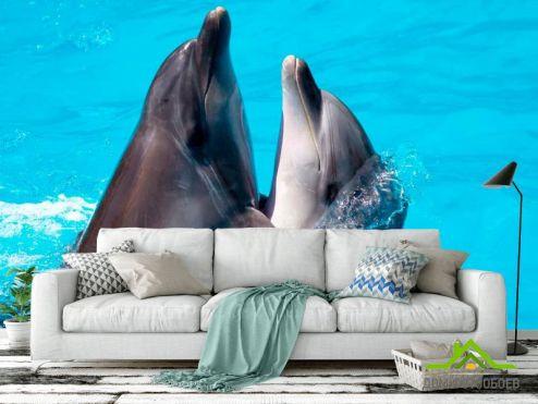 обои Дельфины Фотообои Два дельфина