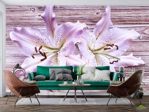 Цветы Фотообои Лилии сиреневые купить
