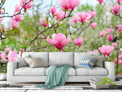 обои Кипарис Фотообои Бледно-розовый кипарис