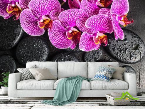 Орхидеи Фотообои сиреневые орхидеи на черных камнях с каплями