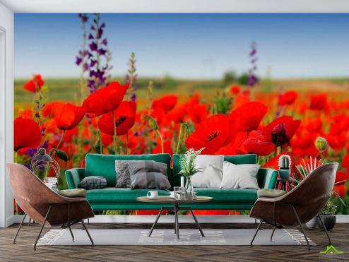 Маки Фотообои Маковое красное поле