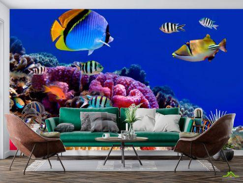 Рыбы и море Фотообои На дне морском