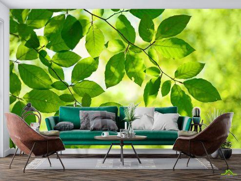 Природа Фотообои зеленые листья на дереве