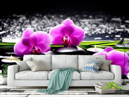 обои Цветы Фотообои Орхидеи на камнях