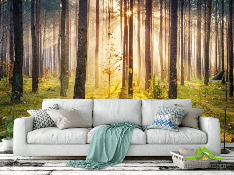 Фотообои Закат в лесу