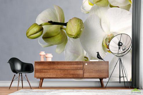 Орхидеи Фотообои крупная белая орхидея с каплями