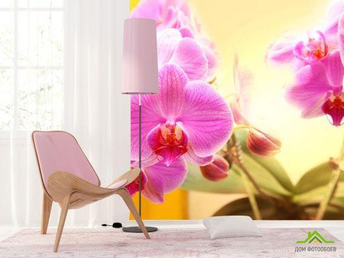 Орхидеи Фотообои розовые орхидеи на желтом фоне