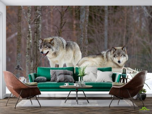 Животные Фотообои два волка на снегу