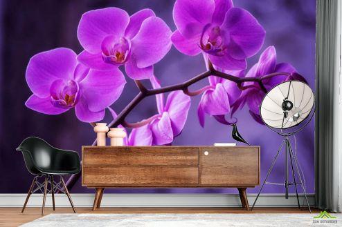 Фотообои разные по выгодной цене Фотообои орхидея