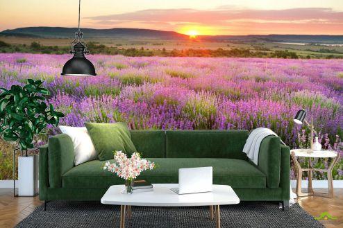 Природа Фотообои Лавандовое поле на закате купить