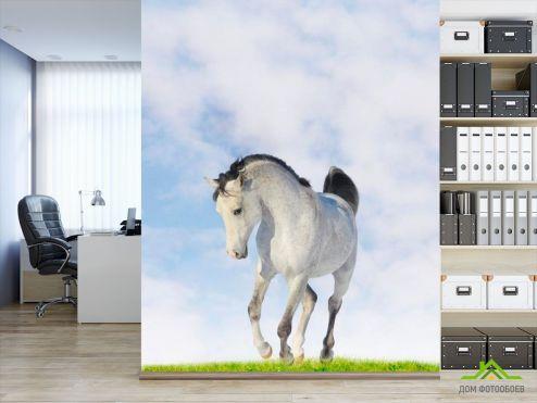 обои Лошади Фотообои Белый конь