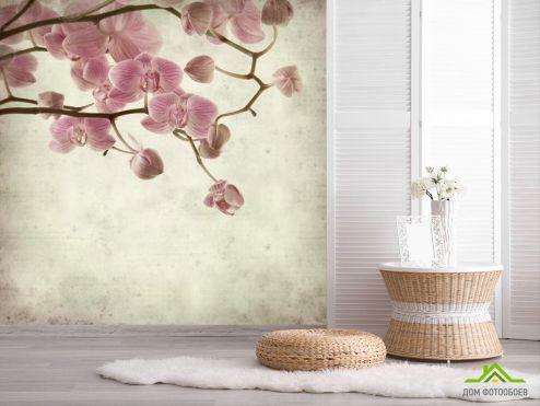 обои Цветы Фотообои Орхидеи кремово-серые