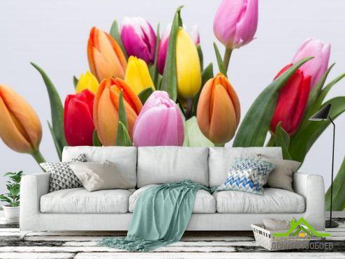Тюльпаны Фотообои тюльпаны разных цветов