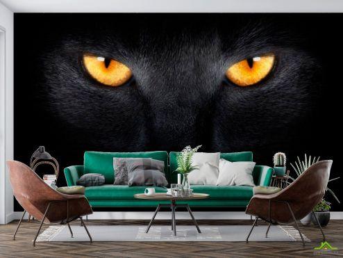 Животные Фотообои Черная кошка