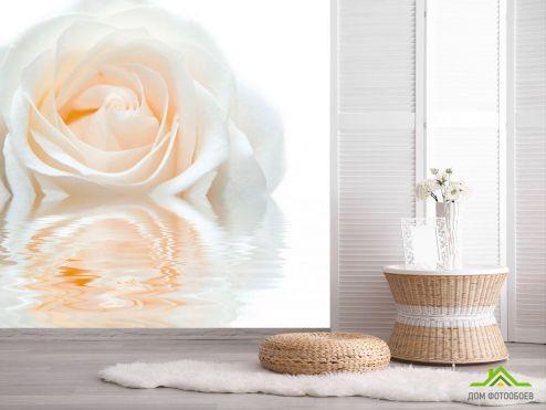 обои Розы Фотообои Бело-кремовая роза