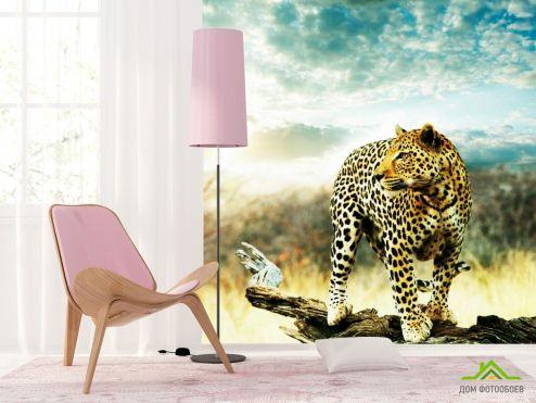 обои Гепарды Фотообои Наблюдающий гепард