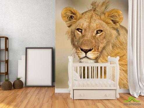 обои Львы Фотообои Мечтающая львица