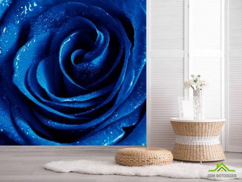 обои Розы Фотообои Синяя роза