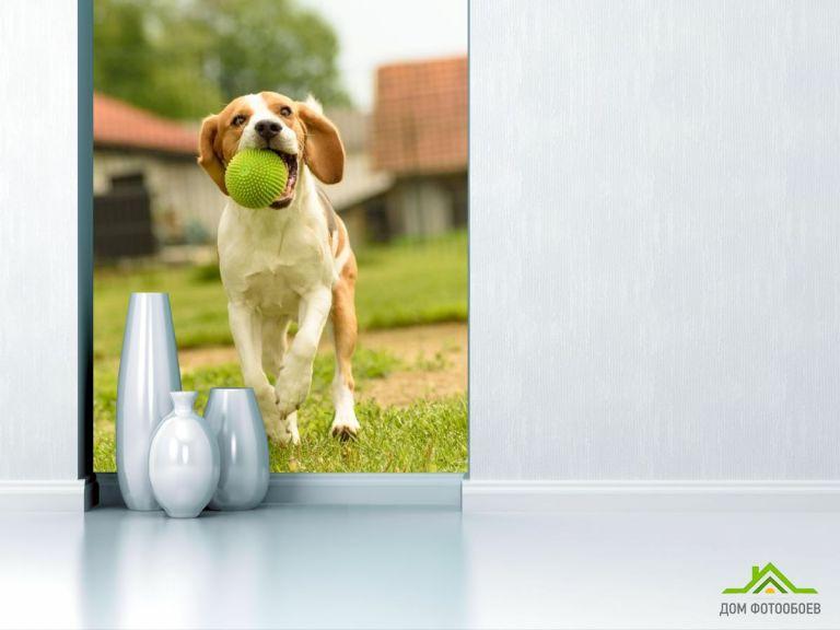 Фотообои собака с мячиком