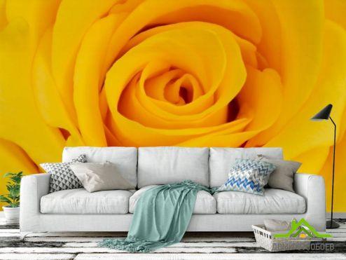 Розы Фотообои желтая роза