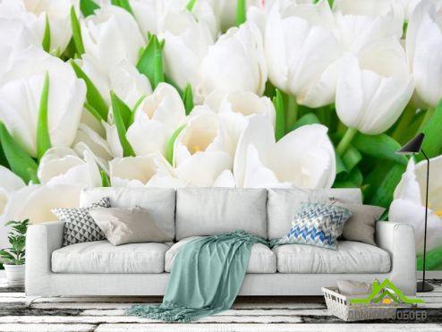 обои Цветы Фотообои Тюльпаны белоснежные