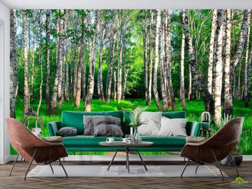 Фотообои Природа по выгодной цене Фотообои Дорога, березки, лес