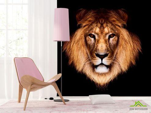 Львы Фотообои Царь зверей