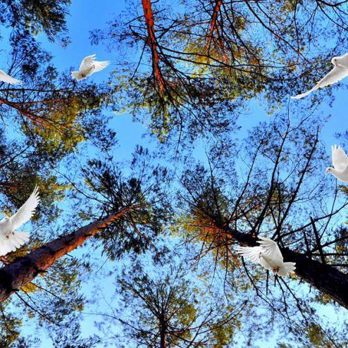на потолок Фотообои Голуби в лесу