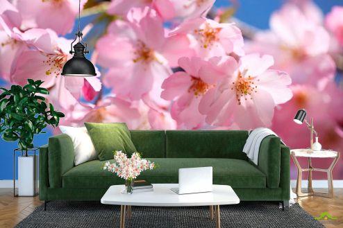 Вишня Фотообои Цветущая садовая вишня