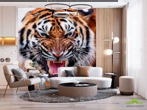 Тигры Фотообои Грозный оскал тигра