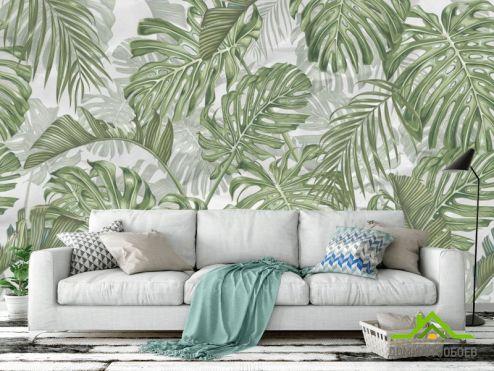 обои тропические листья Фотообои Листья монстеры