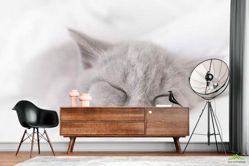 Фотошпалери Тварини Фотошпалери сіре кошеня спить
