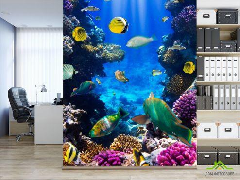 обои Рыбы и море Фотообои Косяк рыбок в море