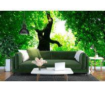 Фотообои Большое,зеленое дерево